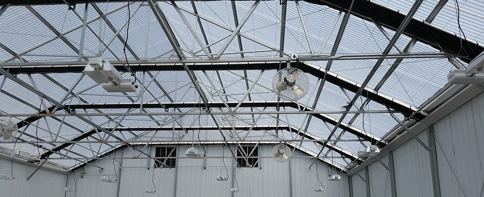 Polycarbonate Roof Coverings to Diffuse Light Throughout the Plant Canopy
